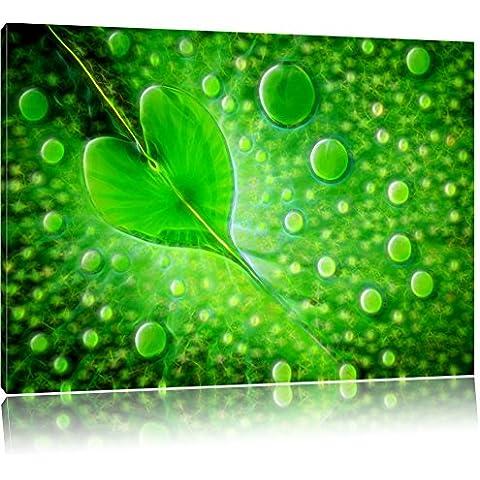 Foglia acqua foresta pluviale tropicale umidità su