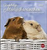 Kuschelige Meerschweinchen Postkartenkalender. Postkartenkalender 2020. Monatskalendarium. Spiralbindung. Format 16 x 17 cm