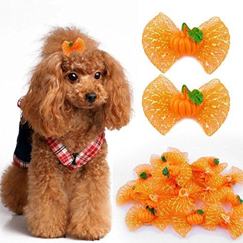 Berry Halloween Kürbis Pattent 20Süßer Hund Katze Haar Bögen mit Gummi Bands Nylon Haustierpflege Einkaufen (Berry Kürbis)