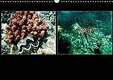 Das Rote Meer ? 2020 (Wandkalender 2020 DIN A3 quer): Bunte Artenvielfalt und Unterwasserlandschaften an den Riffen im Roten Meer. (Monatskalender, 14 Seiten ) (CALVENDO Tiere) -