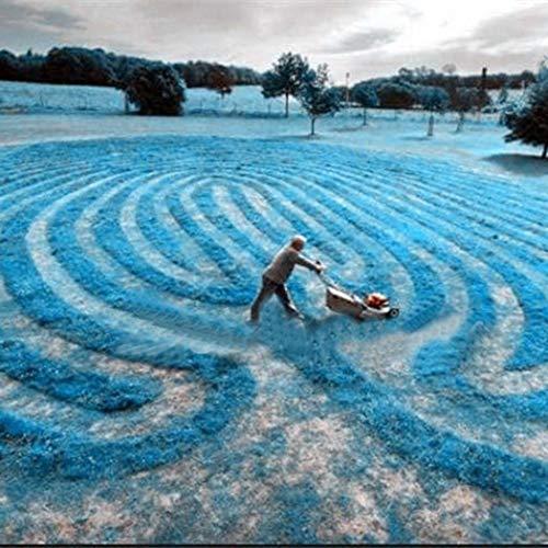Tomasa Samenhaus- Seltene Bärenfellgras Samen 'Festuca gautieri' Dichtwachsendes Gras Samen Garten Fußballplätze Gartenpflanzen Saatgut Rasen Samen- winterhart mehrjährig
