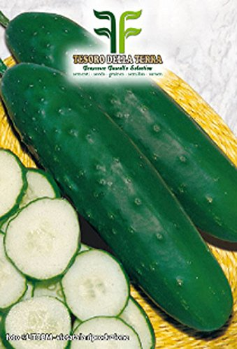 200 aprox – Halblanger Gurkensamen Marktmehr 76 – Cucumis Sativus In Originalverpackung Hergestellt in Italien – Lang-mittel Gurken