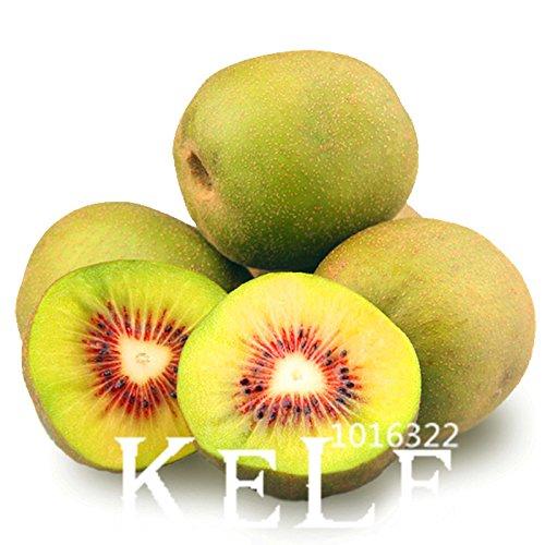 Perte de promotion! 100 PCS / Paquet Graines Mini Actinidia Petite Plante en pot de fruits arbres magnifiques Graines Bonsai Kiwi, # EF4OLM