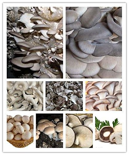 Chine Mushroom Graines Légumes 100pcs / bag New Succlent usine de haute nutrition santé comestibles Pour Happy Farm Planteur