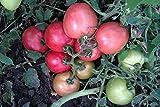 Rosa Tomatensamen Vidimo Nevidimo - Sichtbar Unsichtbar Russisch Erbstück NON-GMO