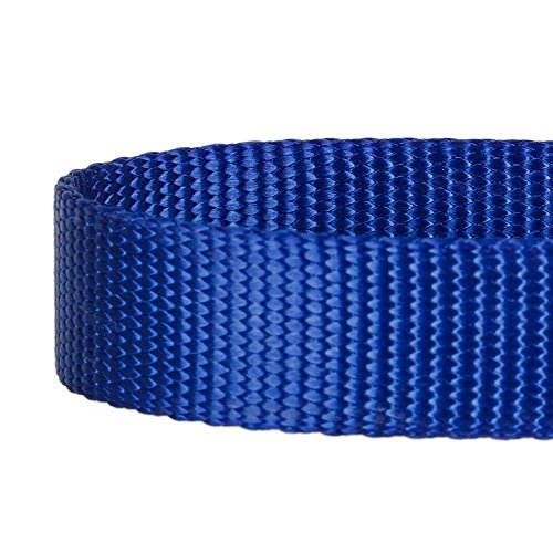 Blueberry Pet Hundehalsband Klassisch Einfarbig 2 cm M Basic Polyester Nylon Hundehalsband Langlebig – Royalblau, Passender Hundegeschirr & Hundeleinen erhältlich separate - 4