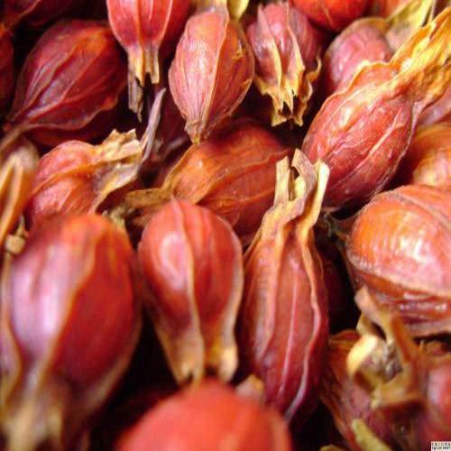 JQ Tea Gute Qualität Bio Trocken Gardenie Frucht Zhizi Chinesischer Kräutertee 1.1 LB / 500g Frische Ernte