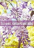 Es rankt, klettert und blüht (Wandkalender 2019 DIN A4 hoch): Eine Auswahl besonderer Kletterpflanzen für Ihren Garten (Monatskalender, 14 Seiten ) (CALVENDO Natur)