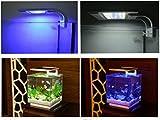 RunQiao SMART LED Aquarium Licht Pflanzen wachsen Beleuchtung Kreative Clip-on Lampe mit EU-Stecker 21cm 6W (Blaues weißes Licht)