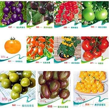 VISA STORE HOO Produkte - Tomatensamen Lila Cherokee Cherry Red Yellow Zebra Tomate Frucht-Gemüse-Bonsai Lebensmittel Neue Arriv!