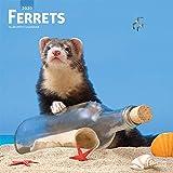 Ferrets - Frettchen 2020- 16-Monatskalender: Original BrownTrout-Kalender [Mehrsprachig] [Kalender] (Wall-Kalender)