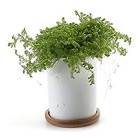 T4U Cylindrique Céramique Pot Plante Récipient Pépinière Pots Succulents Cactus Plante pots Blanc