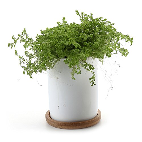t4u-cilindro-blanco-cermicos-planta-maceta-suculento-cactus-planta-maceta-planta-contenedor-vivero-m
