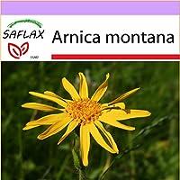 SAFLAX - Árnica - 40 semillas - Arnica montana