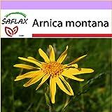 SAFLAX - Arnica des montagnes - 40 graines - Arnica montana