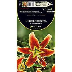 Semillas Batlle 076616Bols - Bulbo Lilium Oriental Sheherezade