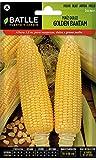 Batlle Gemüsesamen - Zuckermais Golden Bantam (48-72 Samen)