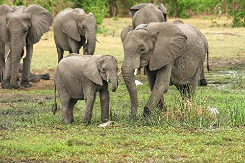 Puzzle De Madera Adulto 1000 Piezas Un Grupo De Elefantes En La...