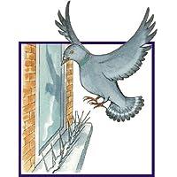 BirdBan - Pinchos para ahuyentar a pájaros (paquete de 2m, tiras de 6 x 330mm