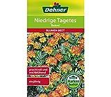 Dehner Blumen-Saatgut, Niedrige Tagetes,