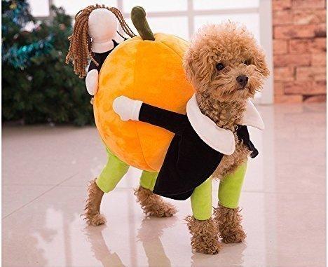 Tragen Kostüm Hunde Kürbis - Süße Kürbis Typ Hund tragen Kostüm