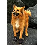 4Paws Dog Boot Active Paw Protectors - (1 x Pair - 2 boots) Reflective and Robust with rubber grip sole and breathable… 11