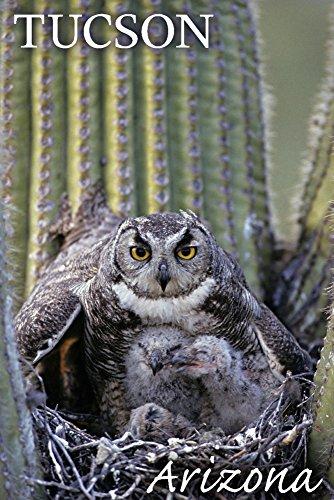 Tucson, Arizona-Eule und Babys, Papier, multi, 24 x 36 Giclee Print - Owl Giclée Print