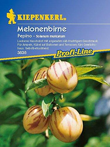 Obstsamen - Melonenbirne Pepino von Kiepenkerl