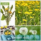 Vista ZLKING 100 Stücke Weißer Löwenzahn Samen Topfpflanze Haben Gelbe Blumen Samen Löwenzahn Im Hof Schweben Für Hausgarten Bonsai
