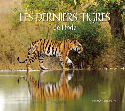 Les derniers tigres de l'Inde
