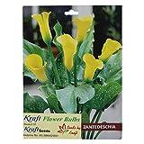 #8: Zentedeschia Cala Lilly Flower Yellow Bulbs (3 Bulbs) By Kraft Seeds