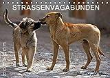STRASSENVAGABUNDEN (Tischkalender 2020 DIN A5 quer): Straßenhunde in Ecuador (Monatskalender, 14 Seiten ) (CALVENDO Orte) -