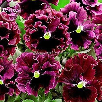 Visa Store 2018 Vente Chaude Rare Ondulé Violet Noir Pansy Fleurs, 20 Graines, Nouveau Beau Papillon Pratique Plantes E3662