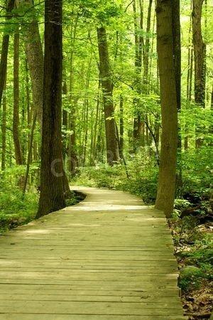 """Poster-Bild 70 x 110 cm: """"A Wooden bridge in the woods"""", Bild auf Poster"""