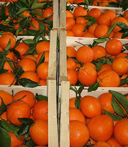 ARISTOS frische Orangen | Apfelsinen | Ungewachst & Unbehandelt | Auch Saftorangen | Schale zum Kochen Backen Marmelade geeignet | Griechische Orangen (2 kg) Ernte: Januar 2020