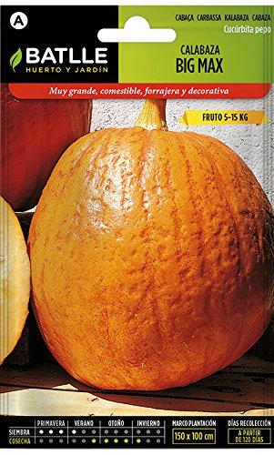 Batlle Gemüsesamen - Kürbis Big Max - Riesig (25 Samen) (Calabaza Semillas De)