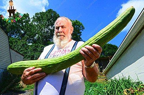 Hot vente 100 graines de fruits concombre Graines jaune vert blanc rouge concombre graines comestibles de semences de légumes Bonsai Maison et Jardin