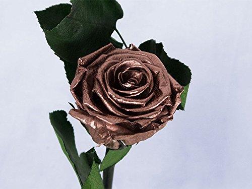 Rosa eterna preservada colo cobre metálico de 25 cm. Los tonos de las flores pueden variar, cada flor es única, también puede influir la pantalla. La rosa eterna preservada es un producto 100% natural que ha pasado por un proceso de preservación para...