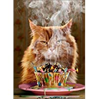 "GINGER CAT BIRTHDAY CARD ""ANOTHER YEAR...ANOTHER BLAZE OF GLORY! by AVANTI"