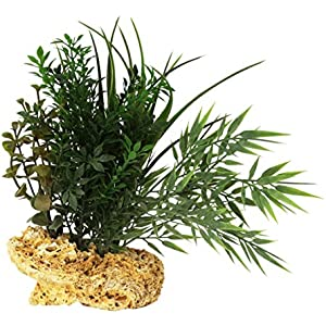 Rock Garden Natur Grün Pflanze mit Kalktuff Rock Boden, 8