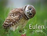 Eulen - Kalender 2018 - Weingarten-Verlag - Wandkalender - 44 cm x 34 cm