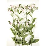 4flores de seda Artificial Forget-me-not aerosoles de GT decoraciones