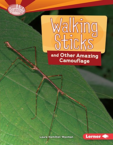 Walking Sticks and Other Amazing Camouflage (Searchlight Books: Animal Superpowers) (Goldenrod Spider)