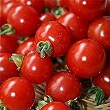 Kings Seeds Bild Paket Gemüse Tomate Sweet Aperitif 10 Samen