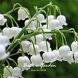 50pcs White Lily dei semi Valle Convallaria majalis perenne fiore giardino domestiche di semi di bel fiore Bonsai impianto fai da te