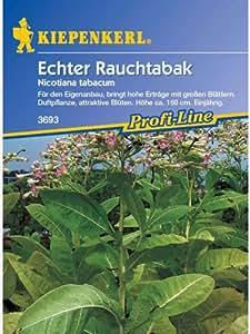 Echter Rauchtabak Nicotiana tabacum