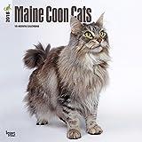 Maine Coon Cats - Hundekatzen 2018-18-Monatskalender: Original BrownTrout-Kalender [Mehrsprachig] [Kalender] (Wall-Kalender)