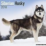 Siberian Husky Calendar 2018 (Square)