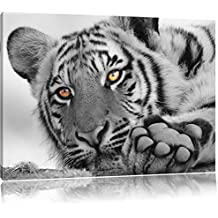 Amazon.fr : tableau tigre blanc