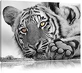 entspannter Tiger schwarz/weiß Format: 100x70 auf Leinwand, XXL riesige Bilder fertig gerahmt mit Keilrahmen, Kunstdruck auf Wandbild mit Rahmen, günstiger als Gemälde oder Ölbild, kein Poster oder Plakat